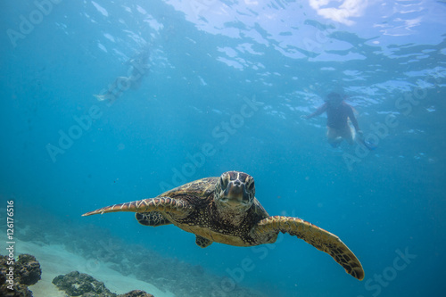 Photo  Ocean Life in Maldives Waters With Turtle Corals and Fish