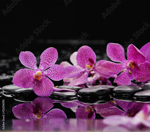 Poster Spa still life with pink orchid on black stones