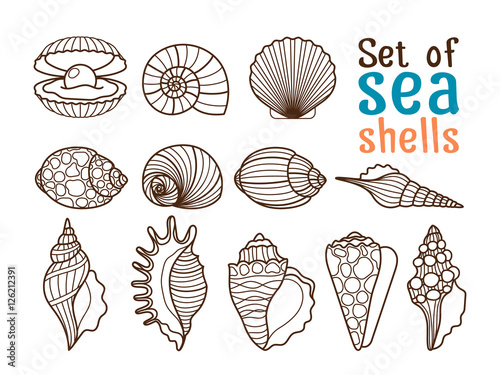 Stampa su Tela Vector sea shell or marine shells line icons set on white background