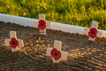 Remembrance Day Poppies And Crosses
