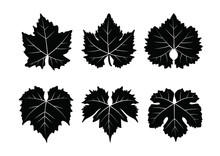 Collection_of_vector_wine_leaves