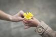 canvas print picture - 黄色い花を手渡す親子の手