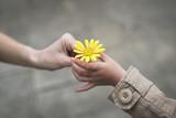 黄色い花を手渡す親子の手