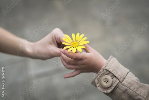 Photo 黄色い花を手渡す親子の手