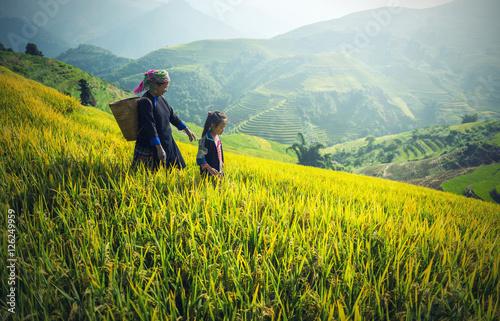 Mother and Daughter Hmong, working at Vietnam Rice fields on terraced in rainy season at Mu cang chai, Vietnam Tapéta, Fotótapéta