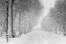 Winter Alley In Snowy Weather With Benches And Lantern