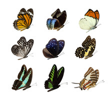 Set Of Butterfly Isolated On W...