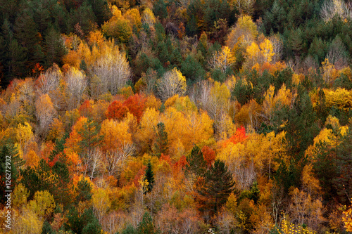 krajobrazowa-piekna-jesieni-natura-na-zboczu-kure-gory-w-kastamonu-turcja