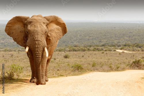 Fotobehang Olifant Elephant standing in the dirt road