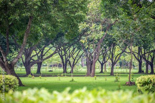 Fotografia, Obraz  Fresh green park