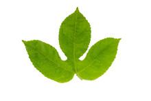 Passion Fruit Leaf Isolated On White Background