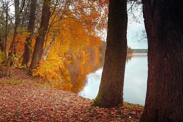 colorful autumn in Brehynsky rybnik pond in Macha region in the Czech Republic