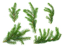 Several Green Fir Branches Of Different Forms On A White Background.
