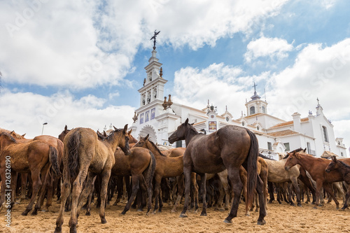 Waiting for of horses in front the church baptismal ritual.