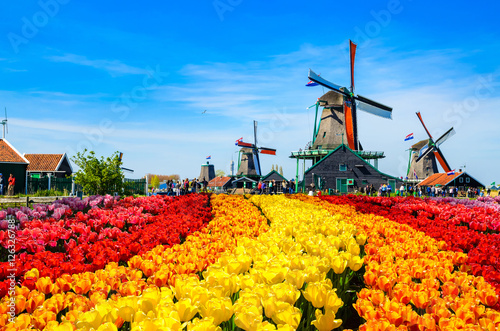 Landscape with tulips in Zaanse Schans, Netherlands, Europe Canvas-taulu