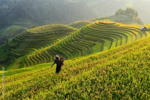 Garden Poster Rice fields Farmer in rice terrace,Vietnam