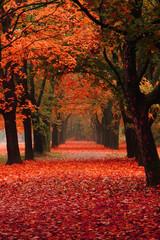 Fototapetaeasy way in the autumn park