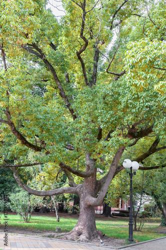 Foto op Canvas Pistache Осенний лес