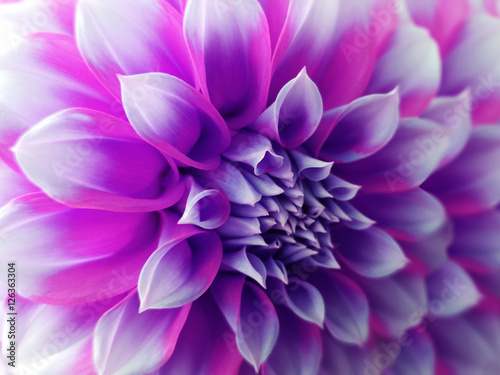 Printed kitchen splashbacks Purple dahlia flower, purple-blue-pink. Closeup. beautiful dahlia. side view flower, the far background is blurred, for design. Nature.