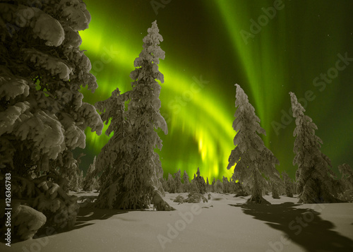Photo sur Toile Aurore polaire Winter night landscape with forest and polar northern lights
