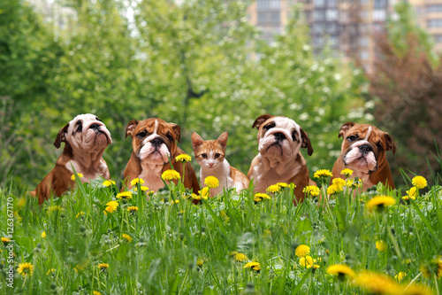Photo Cute dogs and cats in the tall grass among the dandelions