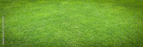 Fototapeta Green grass / herbe verte obraz