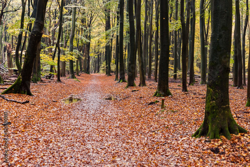 Recess Fitting Magenta Beautiful autumn forest road in Speulderbos Netherlands, at suns