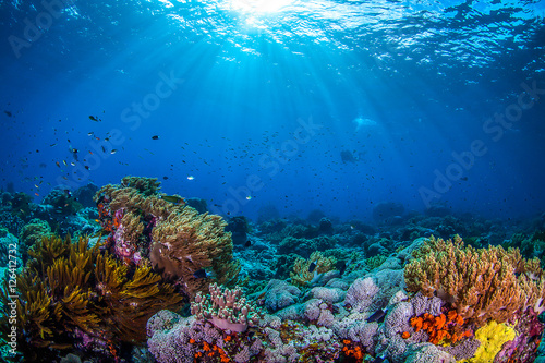 Ocean life, ocean fish and coral underwater
