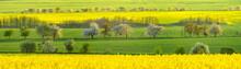 Zielone łany Młodego Zboża Na Wiosennym Polu