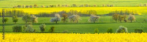 Ingelijste posters Geel Zielone łany młodego zboża na wiosennym polu