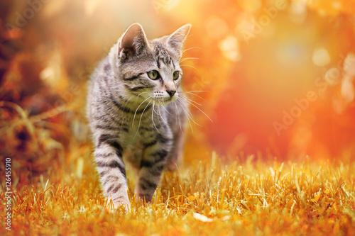 Photo  Getigertes Kätzchen