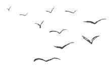 Flyind Birds Isolated Silouette