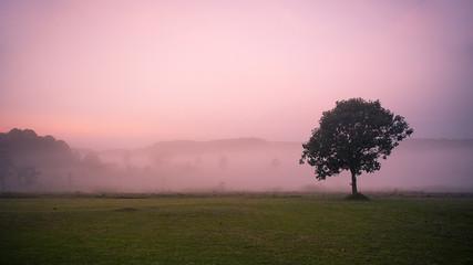 Little tree  in  savanna morning