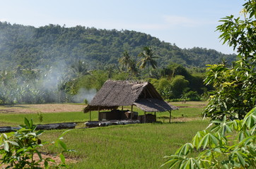 Fototapeta na wymiar Ricefield in Vietnam