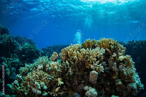 Foto op Aluminium Onder water Coral garden