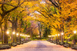 Central Park in New York City. Predawn during autumn on the Mall.