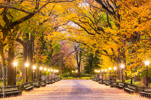 Photo Stands New York Central Park in New York City. Predawn during autumn on the Mall.