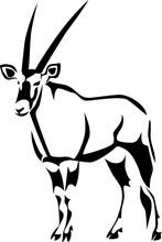 Gemsbok - Oryx Gazelle