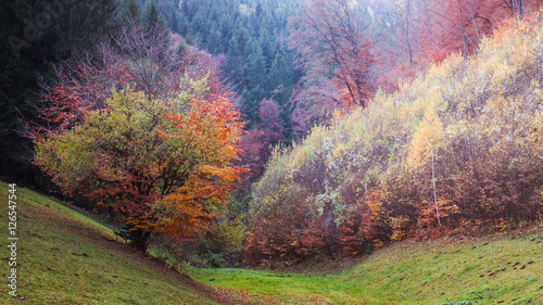 Fotografie, Tablou  Four season tree