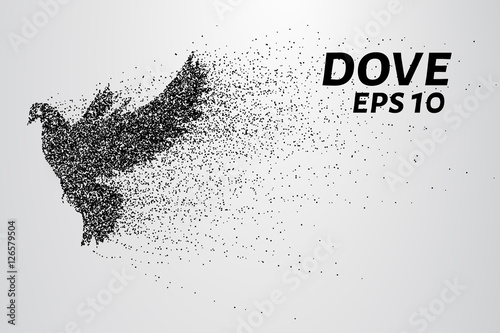 Foto  The dove of the particles