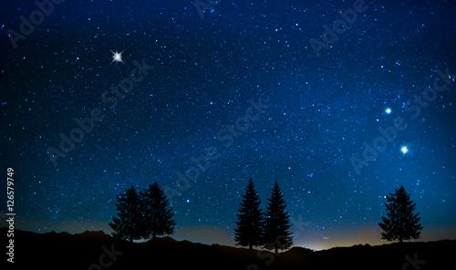 arboles bajo el cielo estrellado