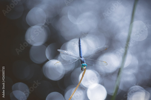 Poster Marron chocolat Dragonfly next to a water fountain on a sunny day
