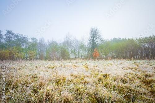 Printed kitchen splashbacks Australia Frosty morning landscape