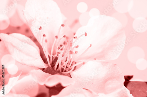 Floral motif wallpaper, Beautiful spring flowers blossom. Poster