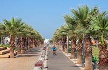 Palm Promenade In Tel Aviv.