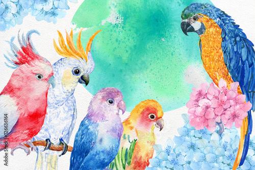 Fototapeta premium akwarela papugi