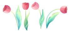 Vector Red Tulip Flowers Isolated On A White Background