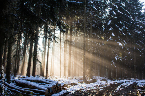 sunrays in the dark winter forest buy this stock photo and explore