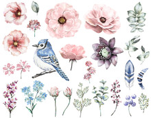 Set Vintage Watercolor Elements Of Rose, Collection Garden And Wild Flowers, Leaves, Branches Flowers, Illustration Isolated, Eucalyptus, Bird - Blue Jay, Feathers, Berry, Me-nots, Herbs