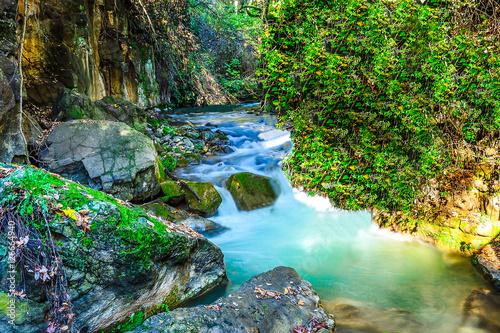 Staande foto Rivier Forest river stream